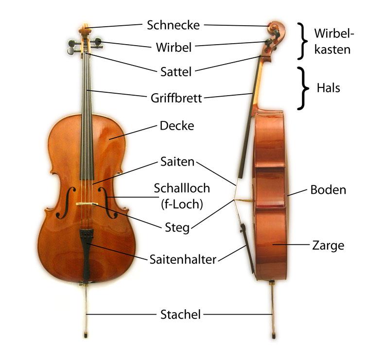 Cello in Frontal- und Seitenansicht mit Beschriftung der Instrumententeile. Quelle: wikipedia.org/Georg Feitscher.